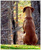 Shop at the Ridgeback Online Store